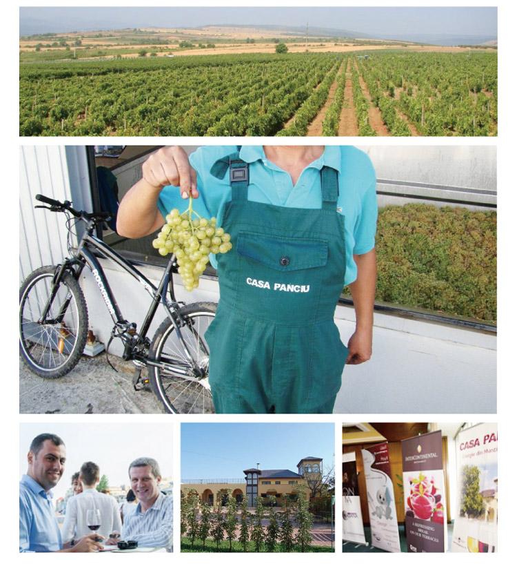 パンチウの葡萄畑やスタッフ達